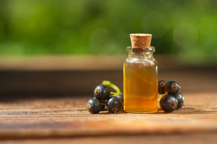 Currant seed oil